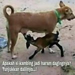 Kambing Nyusu Ke Anjing, Bagaimana Hukum Dagingnya?